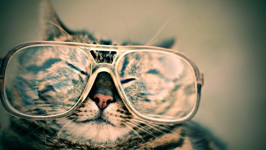 Katze mit großer Brille auf der Nase
